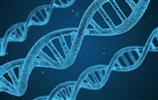 中國醫療市場報告-基因測序行業現狀